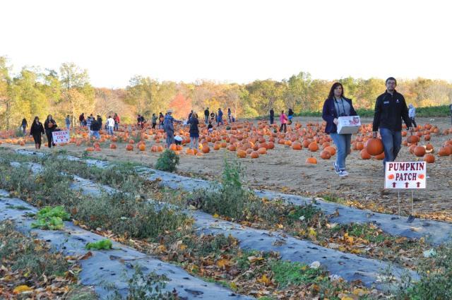 alstede pumpkin patch 1