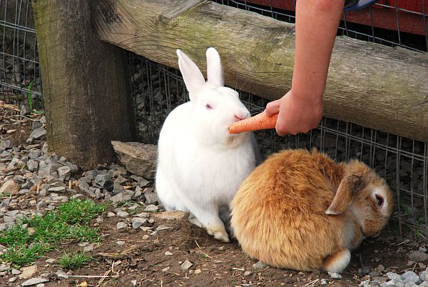 bunny Rabbit Farm