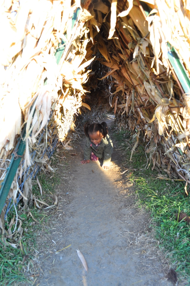crawl hay tunnel