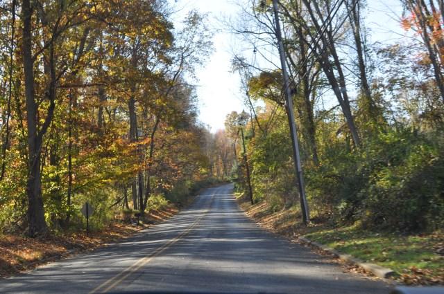 Fall Ride Trees